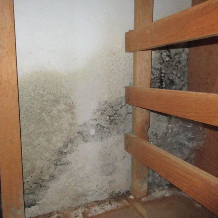 Mold Assessment San Diego