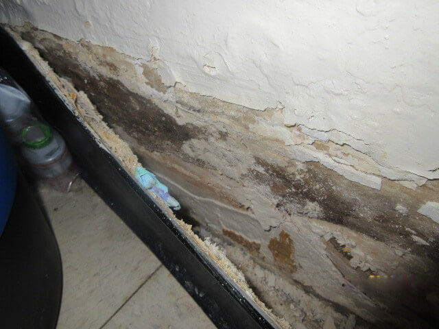 Mold home assessments